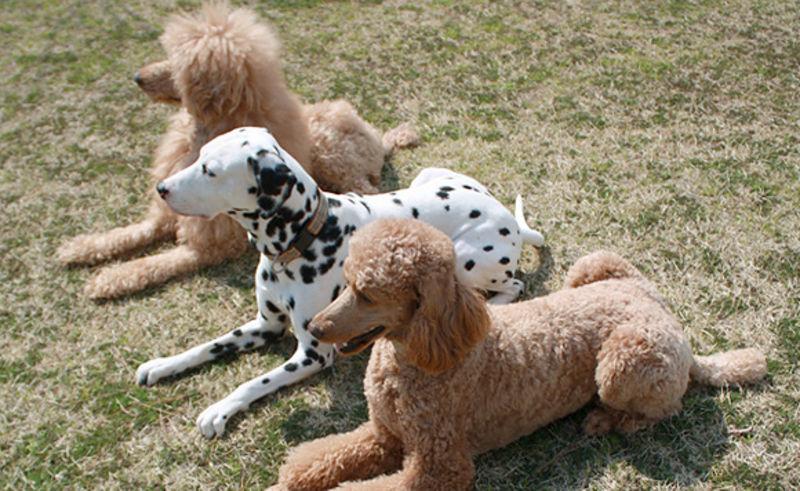 【Web限定】飼主さんも愛犬も安心☆わんこと温泉の旅プラン